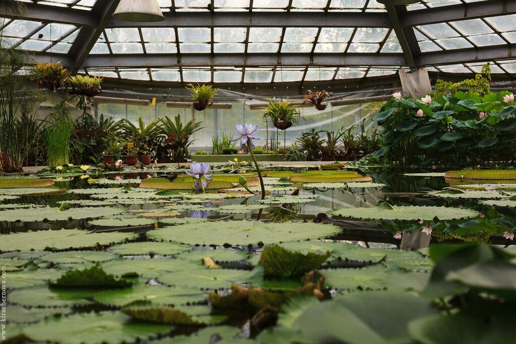 Экскурсия в Ботанический сад Петра Великого